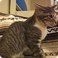 Adopt A Pet :: Babar - Modesto, CA