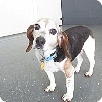 Adopt A Pet :: Baby - Indianapolis, IN