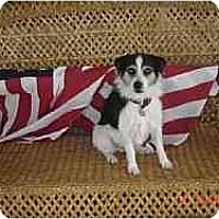 Adopt A Pet :: Bohdi in Houston - Houston, TX