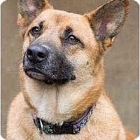 Adopt A Pet :: Chrissy - Portland, OR
