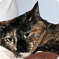 Adopt A Pet :: Flan - Plainville, MA