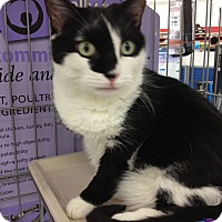 Adopt A Pet :: Salem - Sterling Hgts, MI