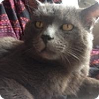 Adopt A Pet :: Duhra - Vancouver, BC