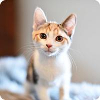 Adopt A Pet :: Jasmine - Xenia, OH