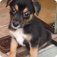 Adopt A Pet :: Jake - Marlton, NJ