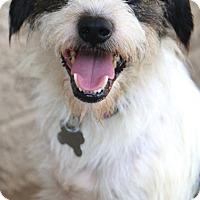 Adopt A Pet :: Wilkins - MEET ME - Norwalk, CT