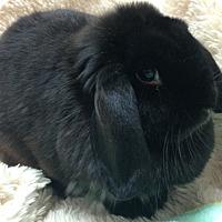 Adopt A Pet :: Kay - Paramount, CA