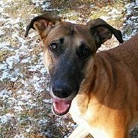 Borzoi/Greyhound Mix Dog for adoption in Lansing, Michigan - Mollie