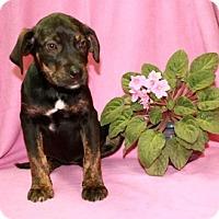 Adopt A Pet :: Cadbury - Salem, NH
