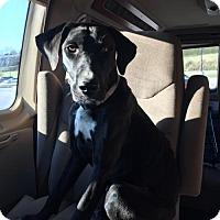 Adopt A Pet :: Hope - Hillsboro, MO