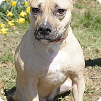 Adopt A Pet :: Brittany - Woodstown, NJ