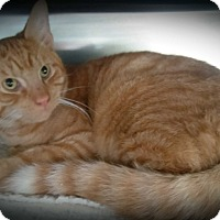 Adopt A Pet :: Elton John - Wilmington, OH
