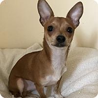 Adopt A Pet :: Q.T - Tumwater, WA