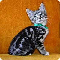 Adopt A Pet :: Beth - Buford, GA