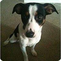 Adopt A Pet :: Mabel - Arlington, TX