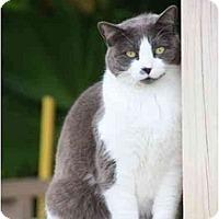 Adopt A Pet :: Molly - Naples, FL
