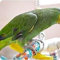 Adopt A Pet :: Bandit - Mantua, OH