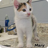Adopt A Pet :: Mary - Dover, OH