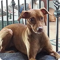 Adopt A Pet :: Ruby - Only $65 adoption! - Litchfield Park, AZ