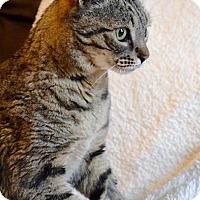 Adopt A Pet :: Axel - Midland, TX