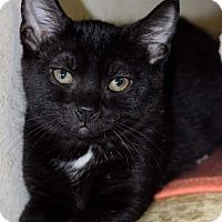 Adopt A Pet :: Lilianna - Staten Island, NY