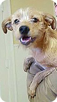 Terrier (Unknown Type, Small) Mix Dog for adoption in Spring Valley, New York - Free Bird