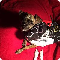 Adopt A Pet :: Lantis - Jacksonville, FL