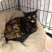 Adopt A Pet :: Cammy - Warwick, RI