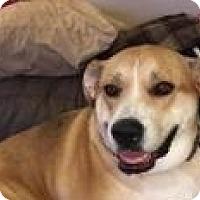 Adopt A Pet :: Angel - Manchester, NH