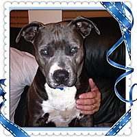 Adopt A Pet :: Graycee Skye - Naples, FL