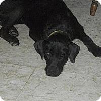 Adopt A Pet :: Pippa - Hancock, MI