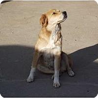 Adopt A Pet :: Coral - Alexandria, VA
