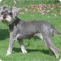 Adopt A Pet :: Violet - Albuquerque, NM