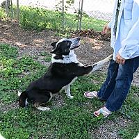 Adopt A Pet :: Blue - Geneseo, IL