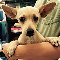 Adopt A Pet :: Sky#2F - Orlando, FL