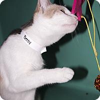 Adopt A Pet :: Betsy - Rockaway, NJ
