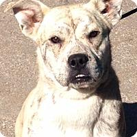 Adopt A Pet :: Joe Joe - Staunton, VA