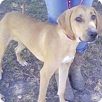 Adopt A Pet :: Tanner - Orlando, FL