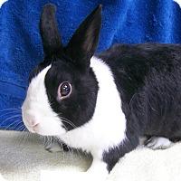 Adopt A Pet :: Leo - Harrisburg, PA