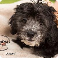 Adopt A Pet :: JESSICA - Inland Empire, CA