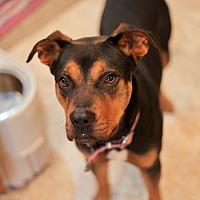 Adopt A Pet :: Susie - Pittsburg, KS