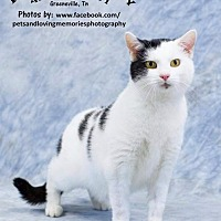 Adopt A Pet :: Lady Di - Greeneville, TN