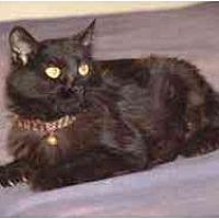 Adopt A Pet :: April 2 - Pasadena, CA