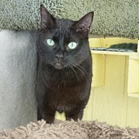 Adopt A Pet :: Ebony - Conway, SC