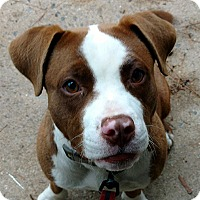 Adopt A Pet :: Luka - Durham, NC