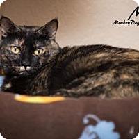 Adopt A Pet :: Chestnut - Fountain Hills, AZ