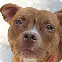 Adopt A Pet :: Noelle - Tampa, FL