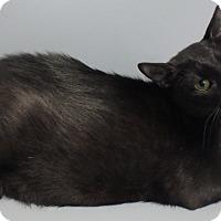 Adopt A Pet :: Ebony - Seguin, TX
