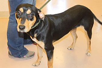 Shepherd (Unknown Type) Mix Dog for adoption in Mineral Wells, Texas - Baby Girl