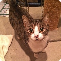 Adopt A Pet :: Freckles - Byron Center, MI